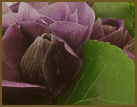 Violette de Paris